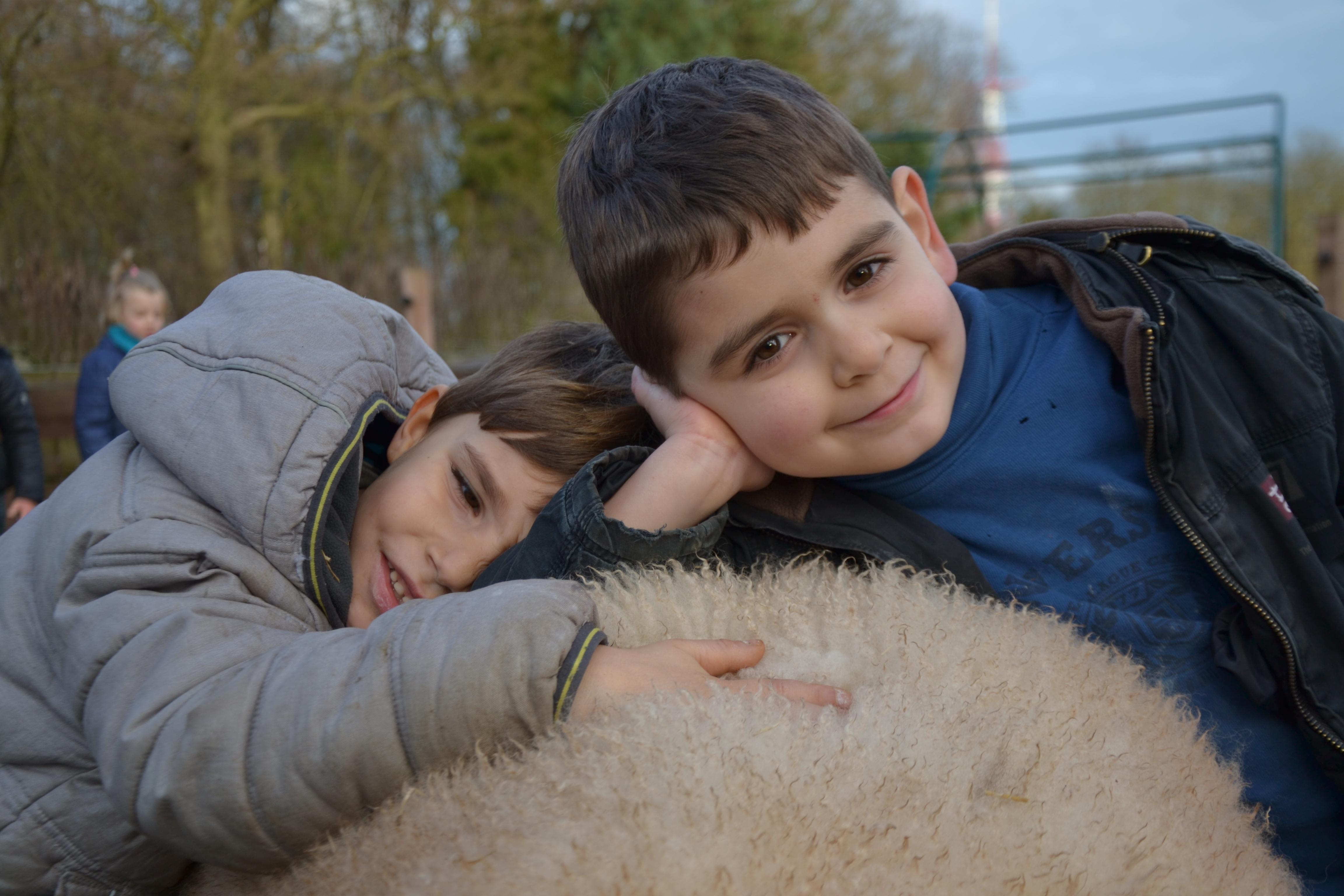 Les enfants découvrent par leurs différents sens la laine du mouton